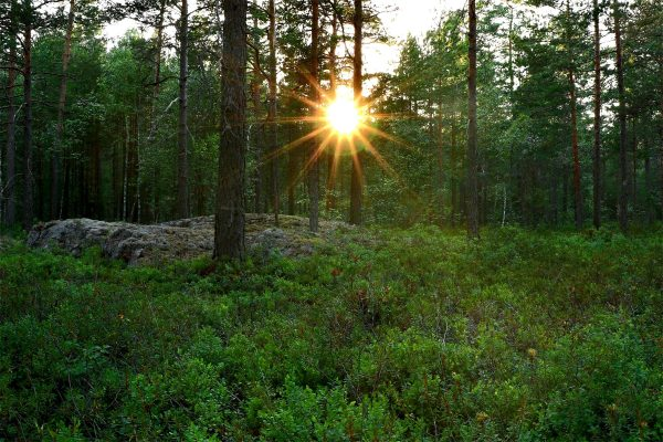 Land of the Midnight Sun – A Swedish Survival Adventure